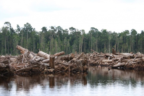 Indonesia approves first REDD+ project in Borneo