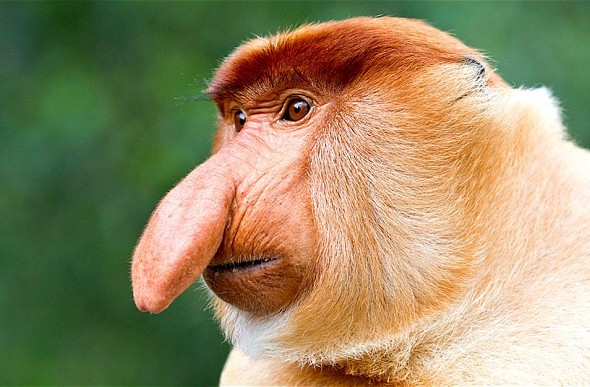 Why ugly animals should be wildlife pin-ups